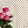 Foto Stock: Card with roses on abstract background