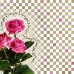 tarjeta de rosas sobre fondo abstracto — Foto de Stock
