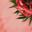Grunge background with red rose for design — Stock Photo