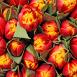 Royalty-Free Stock Photo: Tulips