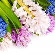 Hyacinth — Stock Photo