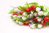Тюльпаны — Стоковое фото