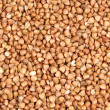 Buckwheat; — Stock Photo