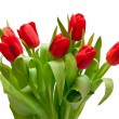 Red tulips - Stockfoto