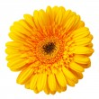 Close up view of yellow daisy — Stock Photo #5115951