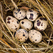 Royalty-Free Stock Photo: Fresh eggs on hay