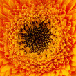 Close up view of yellow daisy — Stock Photo #5118276
