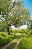 绿色森林 — 图库照片