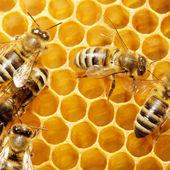 Honeycells 上の蜂 — ストック写真