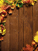 Autumn background with colored leaves — Stock Photo