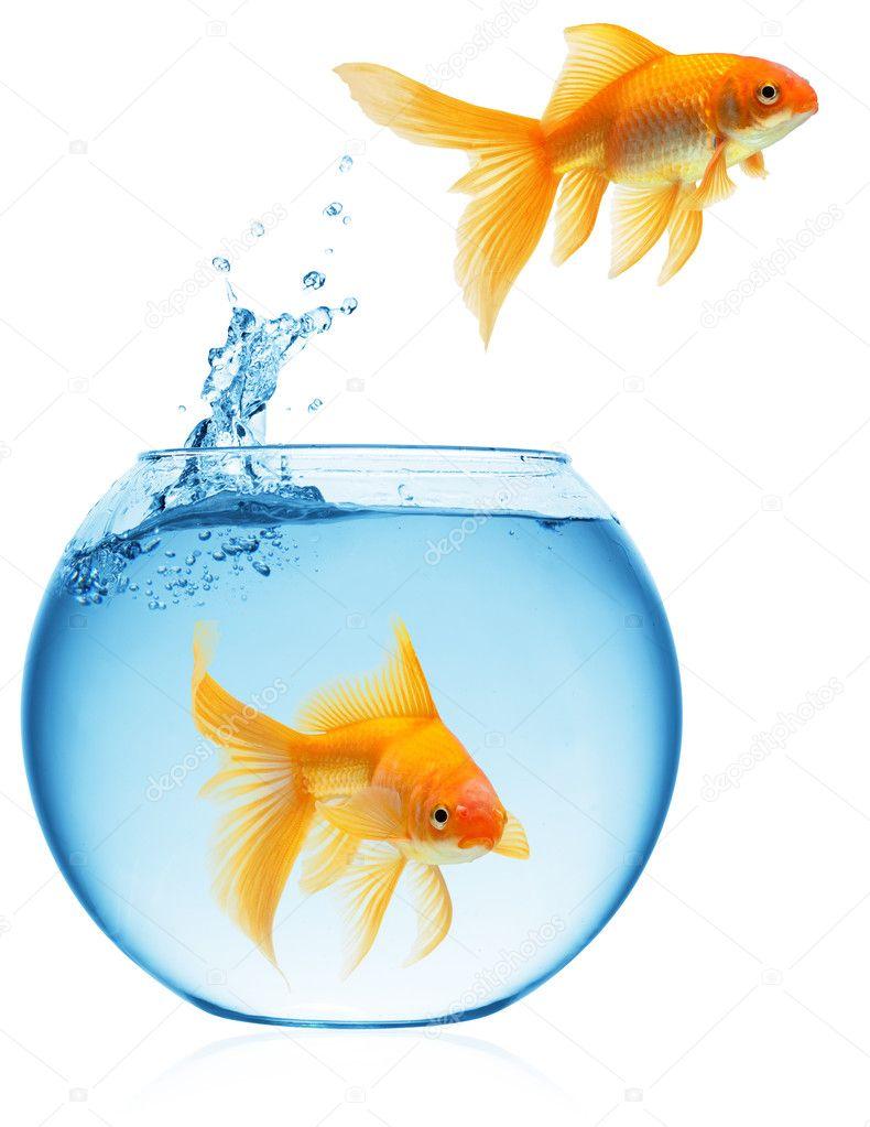 Poisson rouge qui saute hors de l 39 eau photographie for Prix poisson rouge 15 cm