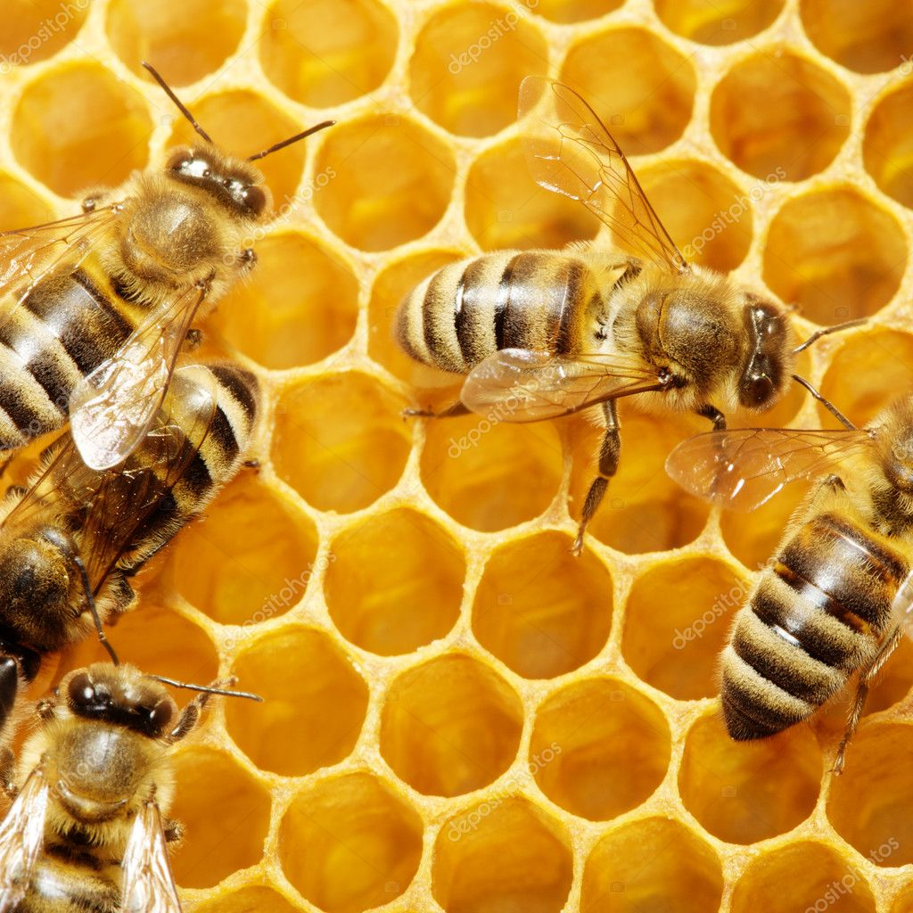 Macro of working bee on honeycells. — Stock Photo #5117034