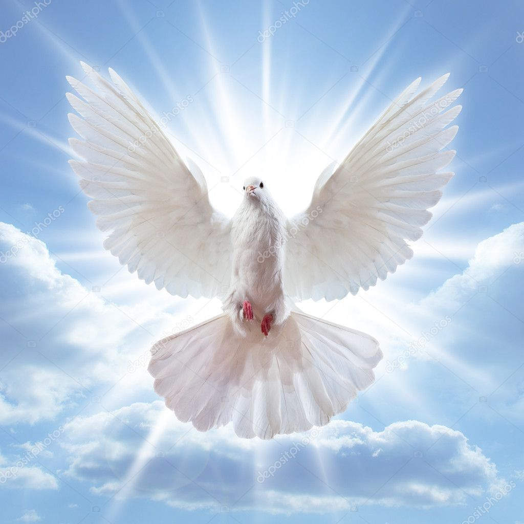 Dove in the air with wings wide open in-front of the sun  Stock Photo #5118673