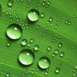 Water drops on fresh green leaf - Stockfoto