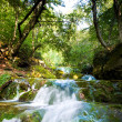 Forest Waterfall - Photo