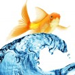 Goldfish jumping out of the water — Stock Photo #5120708