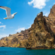 Coastal view with seagull — Foto Stock