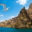 Coastal view with seagull — Stockfoto