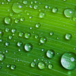 Stock Photo: Water drops on a green leaf.