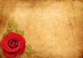 Old paper background, vintage rose — Stock Photo