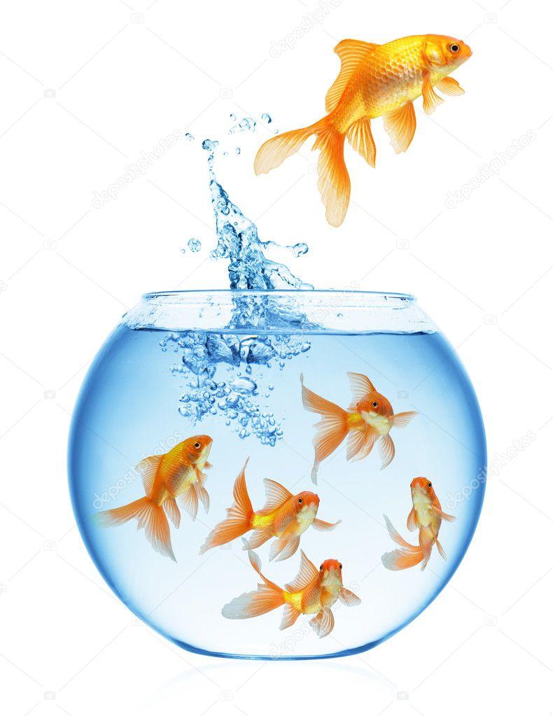 Poisson rouge qui saute hors de l 39 eau photographie for Eau pour poisson rouge