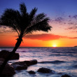 Beautiful sunset at tropical beach. - Photo