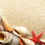 Sea shell on sand — Stock Photo #5130309