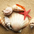 Sea shell on sand — Stock Photo #5130363
