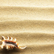 Sea shell on sand - Lizenzfreies Foto