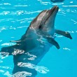 A dolphin looking up - Foto Stock