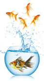 A goldfish jumping out of the fishbowl — Stock Photo
