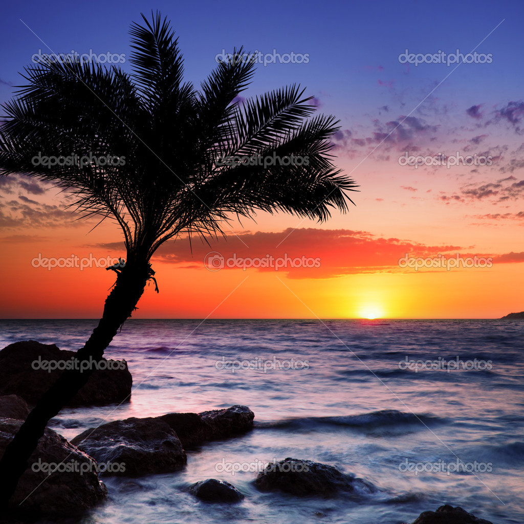 Beautiful sunset at tropical beach. Crimea. Ukraine. — Foto Stock #5130156