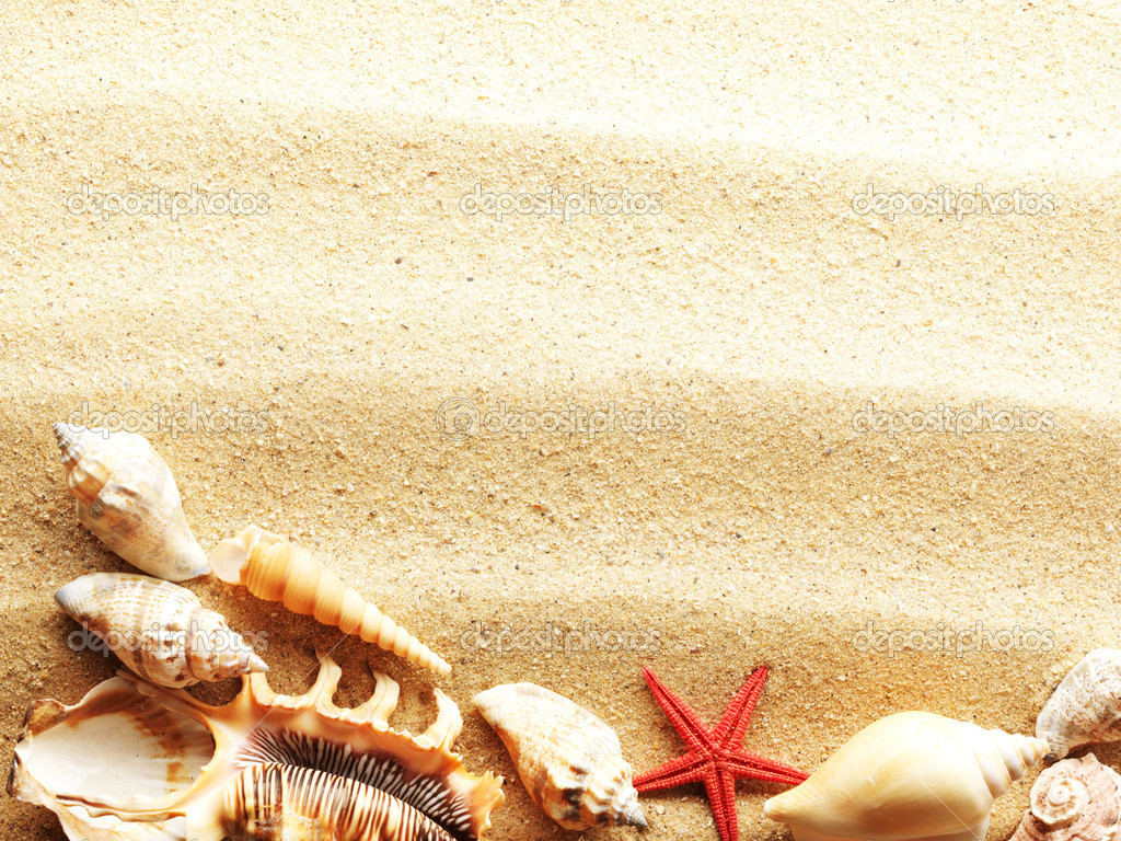 Sea shells with sand as background — Stock Photo #5131335