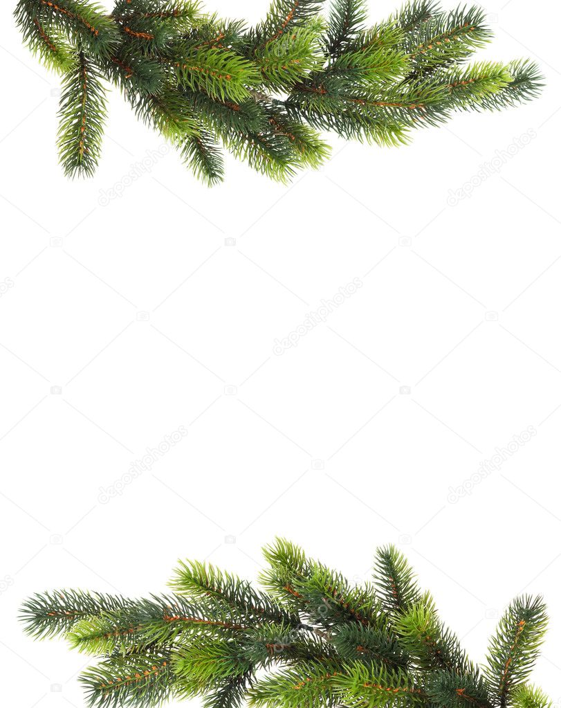 Fresh green fir branches isolated on white background — Foto Stock #5133844