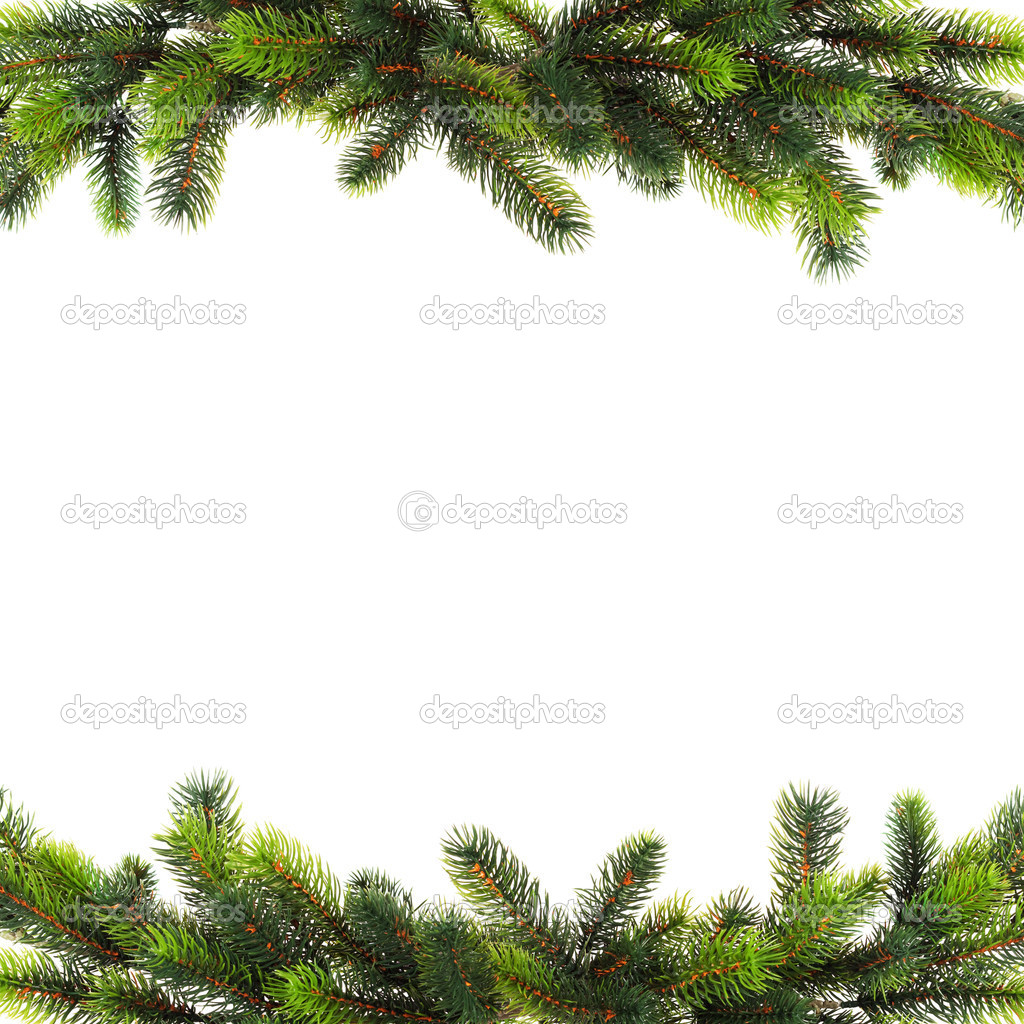 Close up of fir tree brach isolated on white  Stock Photo #5133890