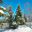 Winter park in snow — Stock Photo #5144031