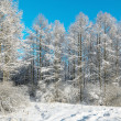 Winter park in snow — Stock Photo #5144032
