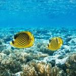 rafa koralowa — Zdjęcie stockowe #5144213