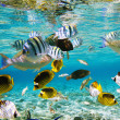 Coral reef — Stock Photo #5144245