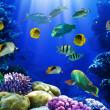 Coral reef — Stock Photo #5145646