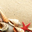 Sea shell on sand — Stock Photo #5145772