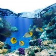 Coral reef — Stock Photo #5146566