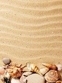 Sea shell on sand — Stock Photo