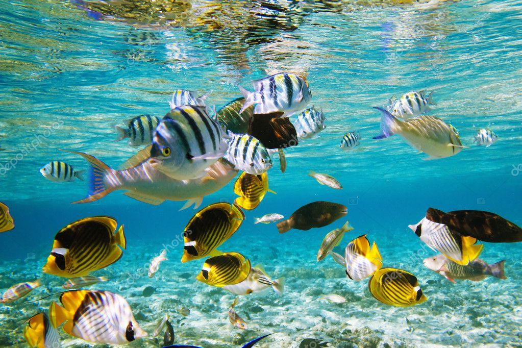Фотообои Коралловый риф