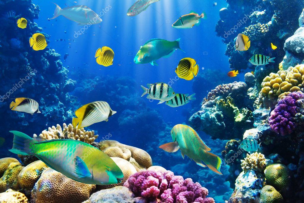 Фотообои Photo of a coral colony on a reef, Egypt