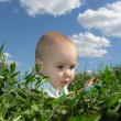 Royalty-Free Stock Photo: Baby in herb and sky