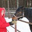 Winter girl with horse — Stock Photo