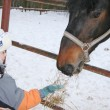 Winter boy with horse — Stock Photo