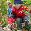 Children explore shelf fungus - Stock Photo
