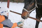 Kış çocuğu atı ile — Stok fotoğraf
